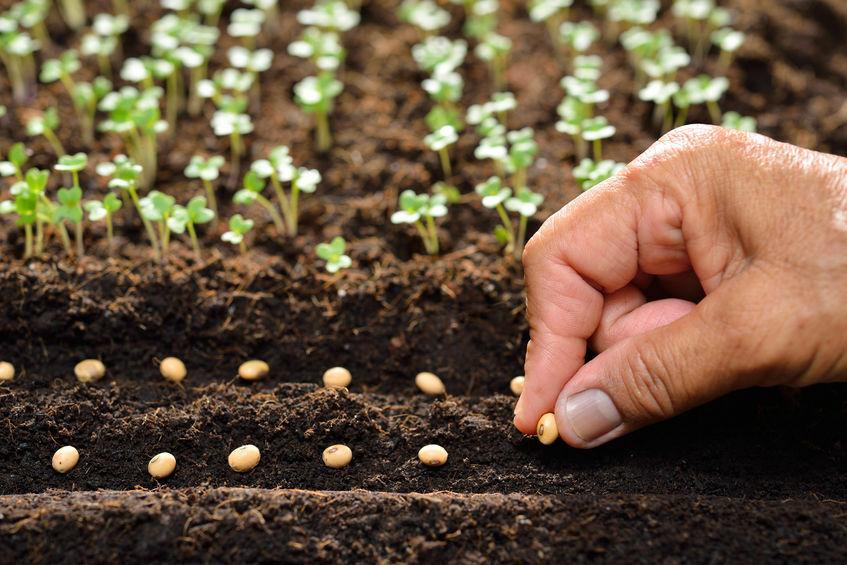 Zöldség vetőmagok, fűszer vetőmagok
