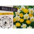 "Duth Vintage 'Moon and Stars"" virághagyma-kollekció"