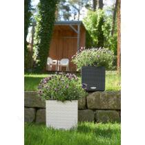 Lechuza Cube Cottage