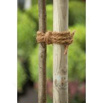 Kókuszrost kötözőzsineg