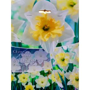 Changing Colors 'Changing Colors' nárcisz virághagyma-kollekció