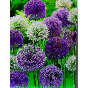 Duth Vintage 'Bubble Blend' virághagyma-kollekció