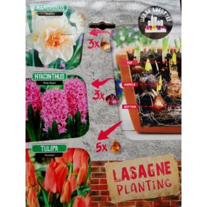 Lasagne Planting 'Pink' virághagyma-kollekció