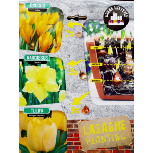 Lasagne Planting 'Yellow Mix'