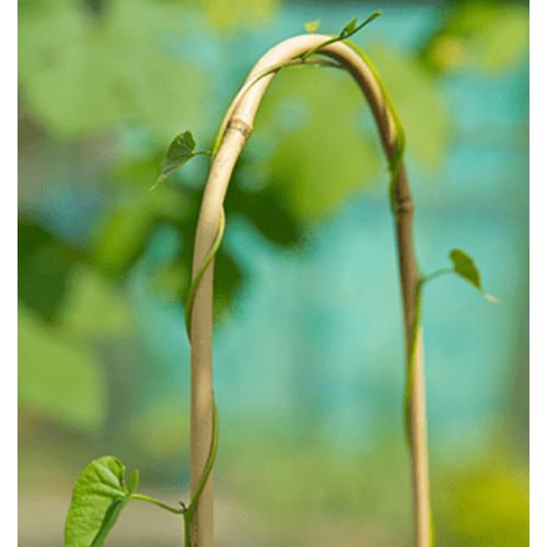 Bambusz karó 90 cm