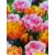 Duth Vintage 'Foxy Freedom' virághagyma-kollekció