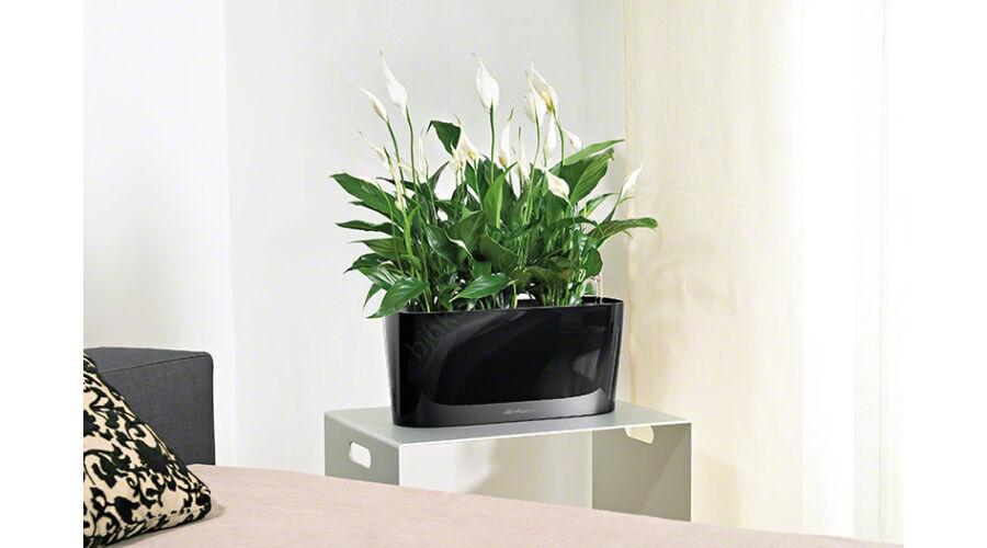 lechuza delta pr mium 20. Black Bedroom Furniture Sets. Home Design Ideas