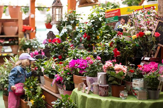 Latinkert Kertészeti árudA